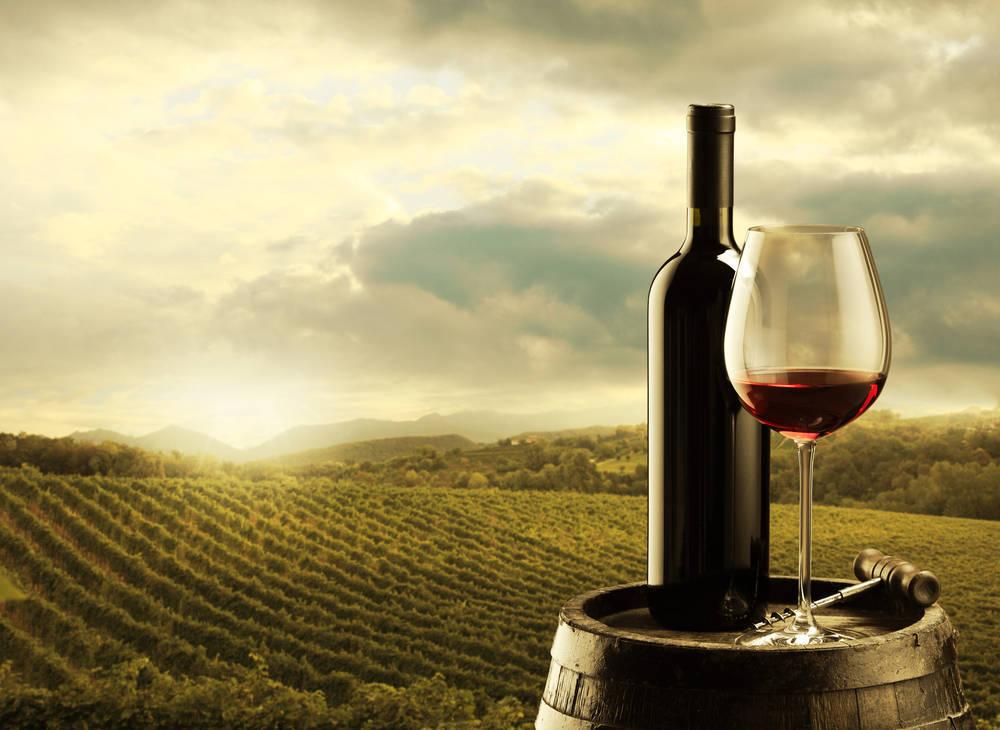 El sector vinícola español, una referencia para nuestra sociedad