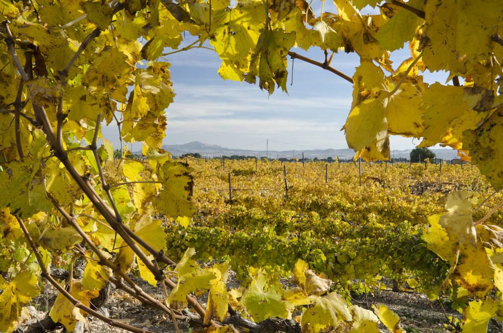 El vino de Alicante es un producto excepcional